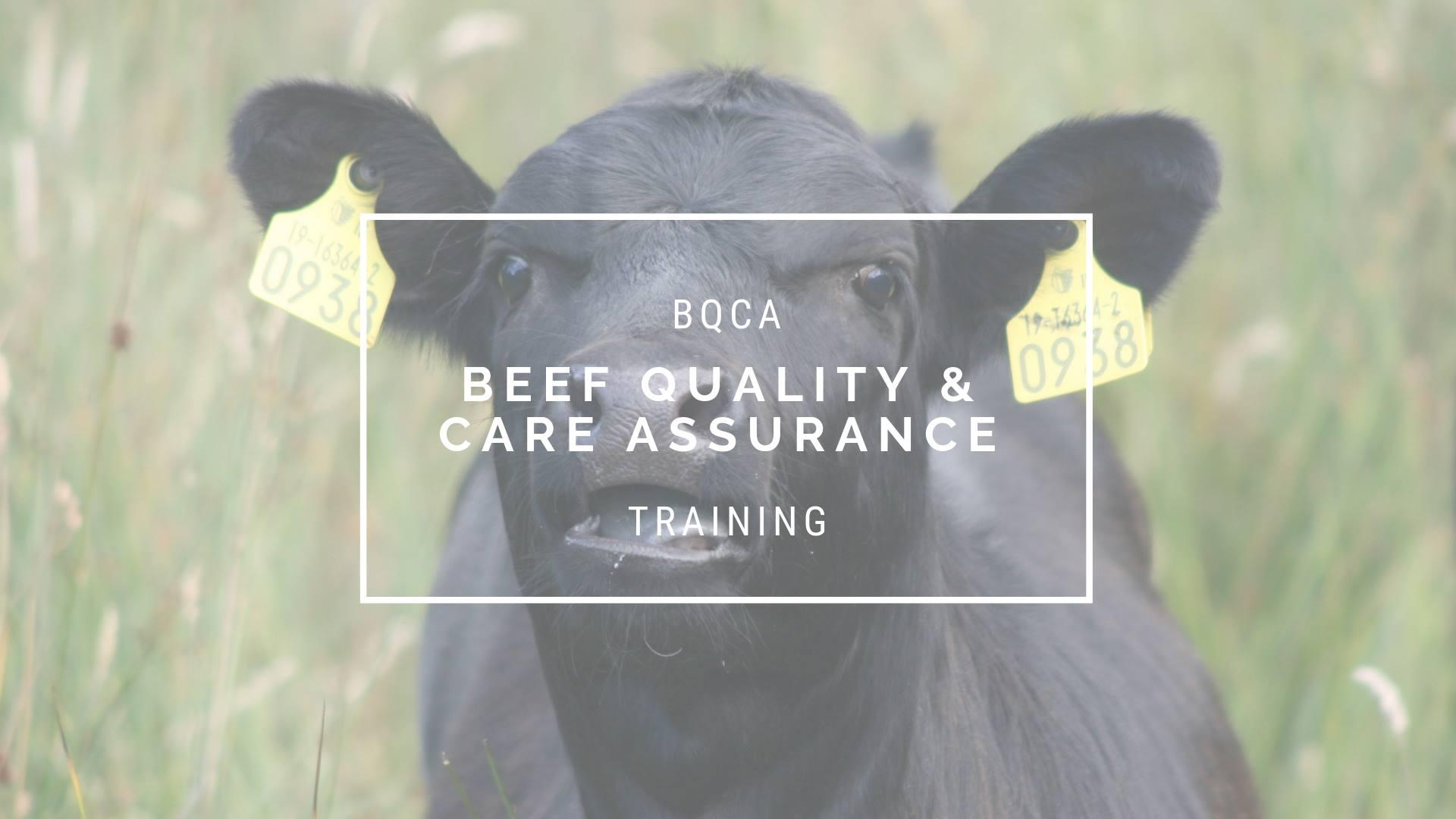 Beef Quality and Care Assurance Training