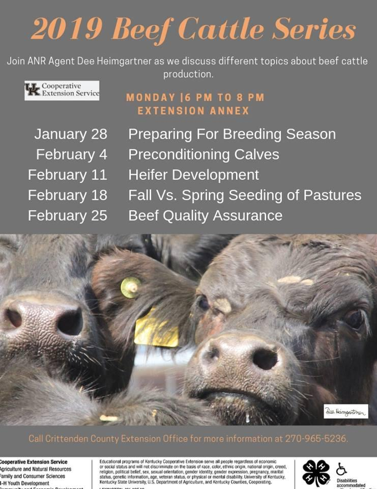 Beef Cattle Series