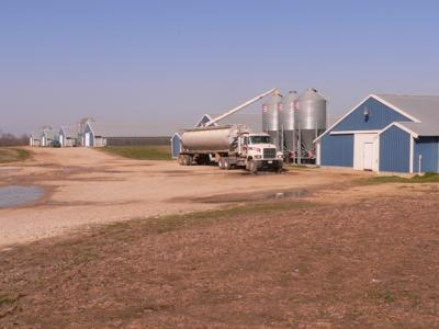 broiler farm getting feed