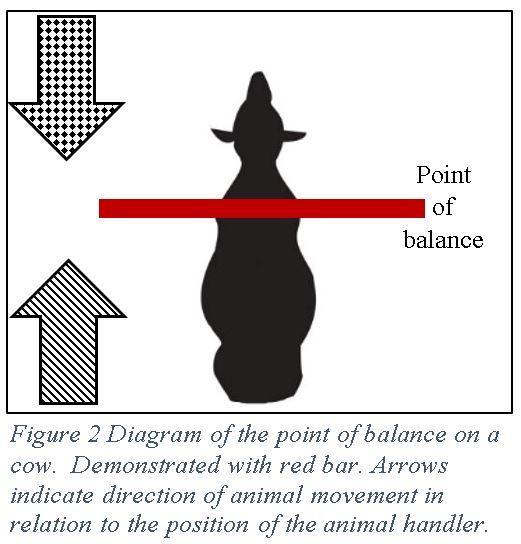 Dairy Stockmanship figure 2
