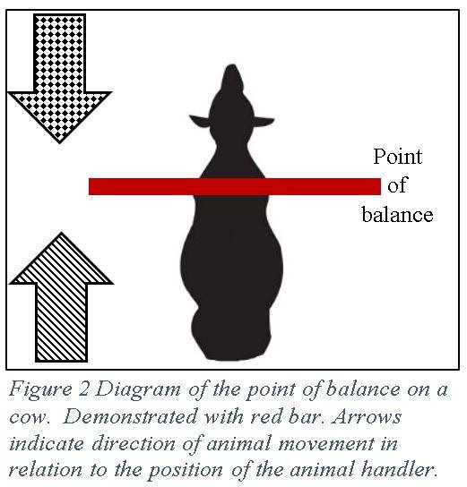 Dairy Stockmanship figure 2