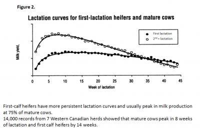 Lactation Curves for first lactation heifers and mature cows