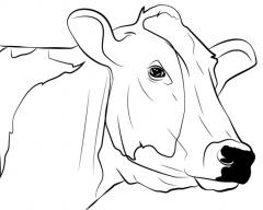 Hand drawn cow face