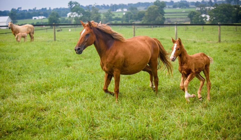 AFS Equine