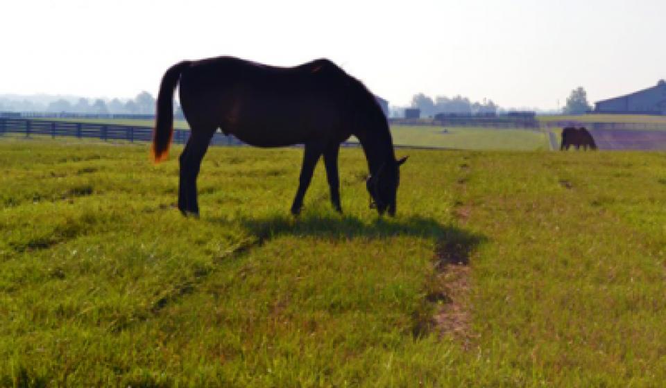 Horse in Plot