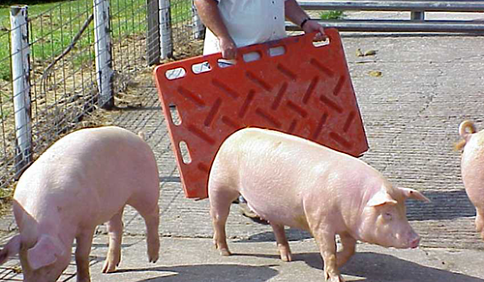 Swine moving