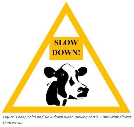 Dairy Stockmanship figure 3