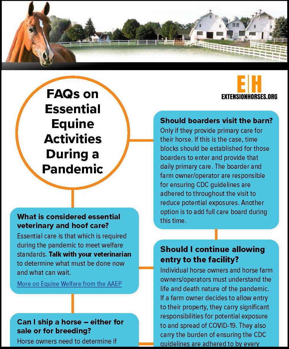 FAQs on essential equine care during a pandemic