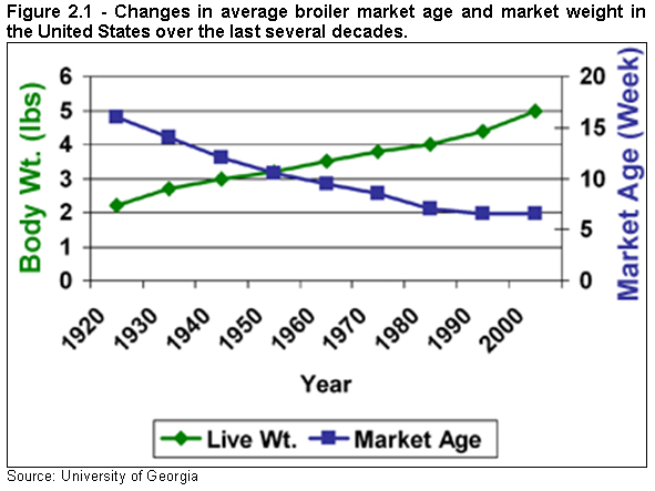 Figure 2.1 - Changes in average broiler market age and market weight in the United States over the last several decades