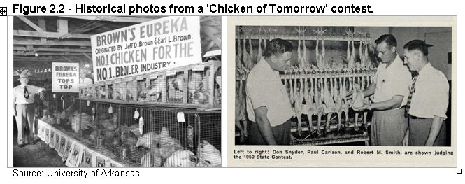 Figure 2.2 - Historical photos from the 'Chicken of Tomorrow' contest