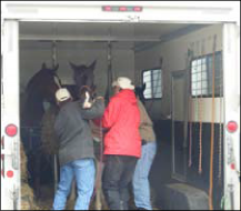 Horses being evacuated from a disaster area.