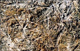 Moldy hay (Ray Smith, UK Plant and Soil Sciences)