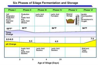 Six phases associated with silage fermentation and storage.