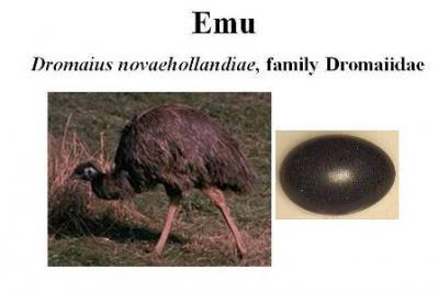 products emu