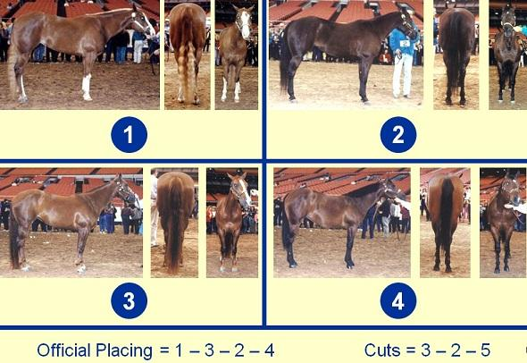 Quarter Horse Mares – Side, Rear, and Front Views