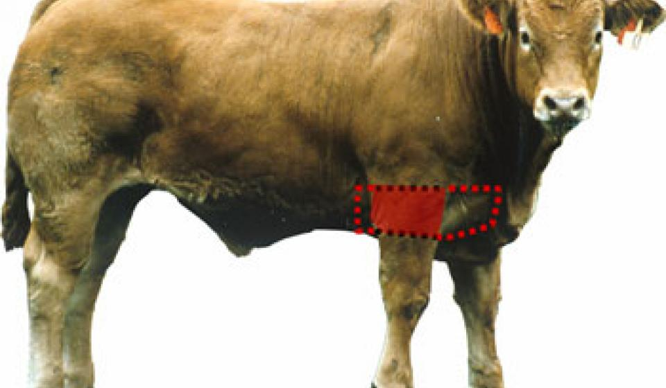 Beef Wholesale Cuts | Animal & Food Sciences