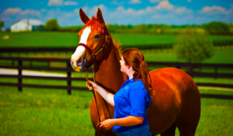 Shannon and Horse